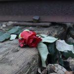 פרח על פסי הרכבת באושוויץ. צולם במסע לפולין 2018