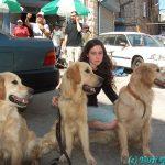שלושת הכלבים ששיחקו את הכלב במישהו לרוץ איתו